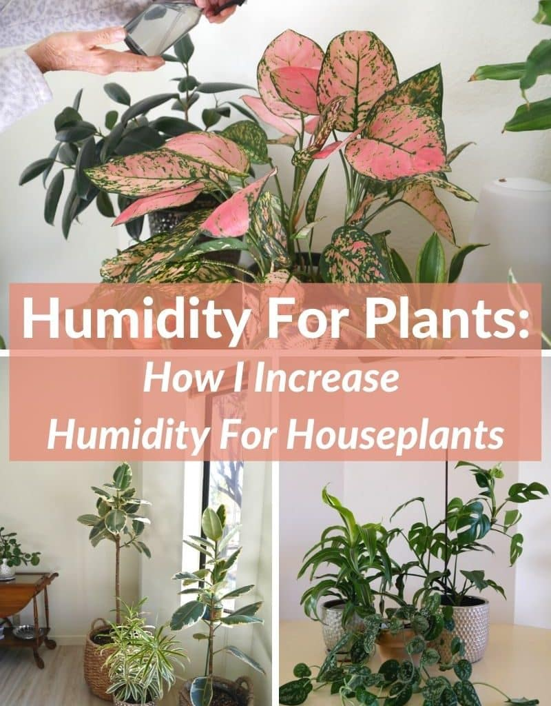 a collage with 3 photos of different houseplants the text reads humidity for plants how I increase humidity for houseplants