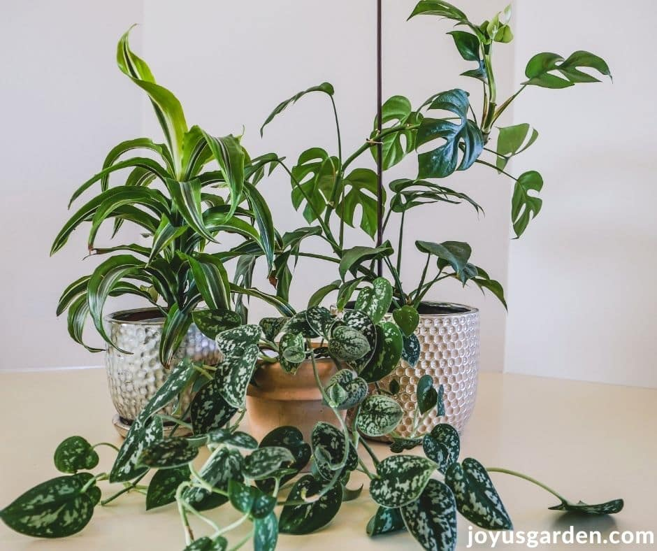 a grouping of 3 small houseplants sit on a white kitchen counter