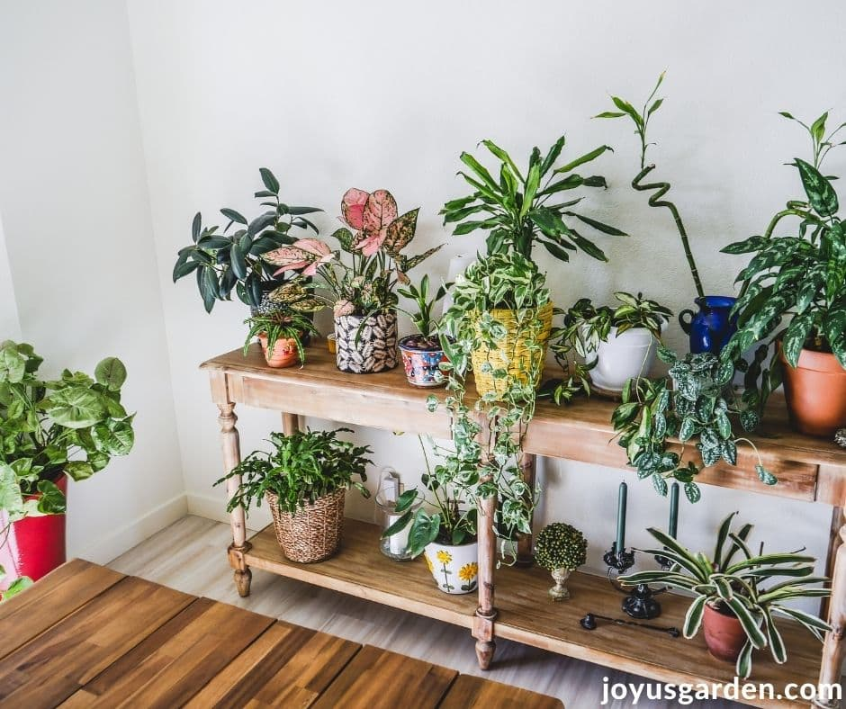 many different houseplants grow on a 2 tiered table