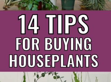 various houseplants with text 14 tips for buying houseplants