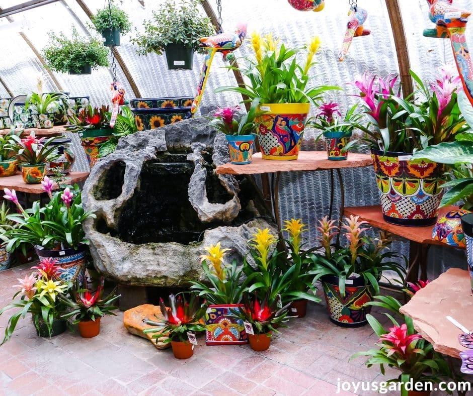 a beautiful display of flowering bromeliads in colorful pots for sale at a garden center