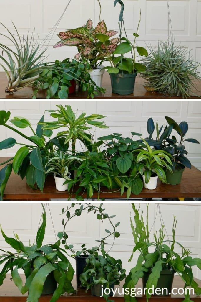 a collage of 3 different photos showing houseplants on a work table