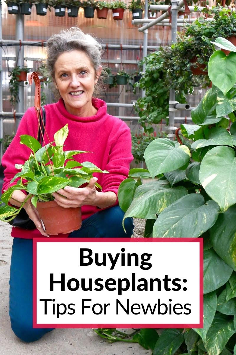 nell foster holds a pothos plant in a greenhouse the text reads buying houseplants: tips for newbies