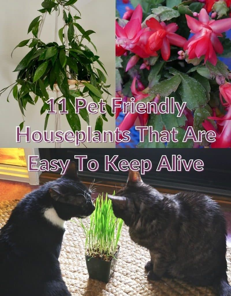 a collage of 3 photos of houseplants, 1 of them with 2 cats the text reads pet-friendly houseplants that are easy to keep alive