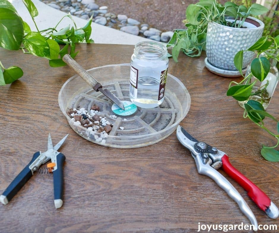 tools & materials need for pothos propagation on a work table