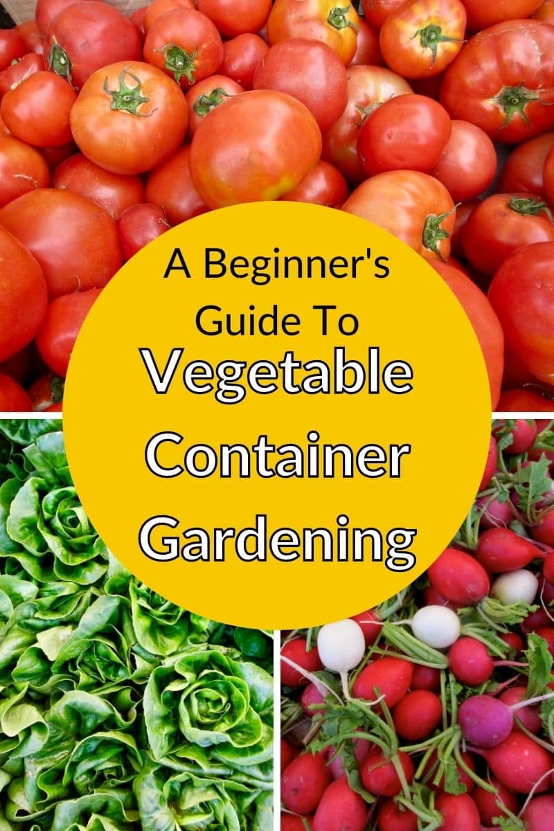 a collage of photos of tomatoes, green head lettuce & multi colored radishes the text reads a beginner's guide to vegetable container gardening
