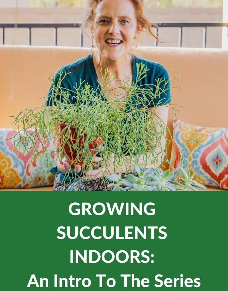 a woman in a green shirt holds a succulent plant the text reads growing succulents indoors an intro to the series