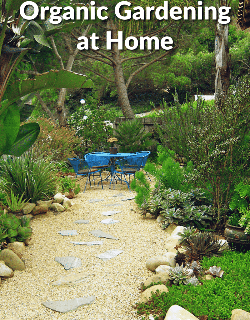 a beautiful garden with a gravel patio area & lots of succulents the text reads organic gardening at home