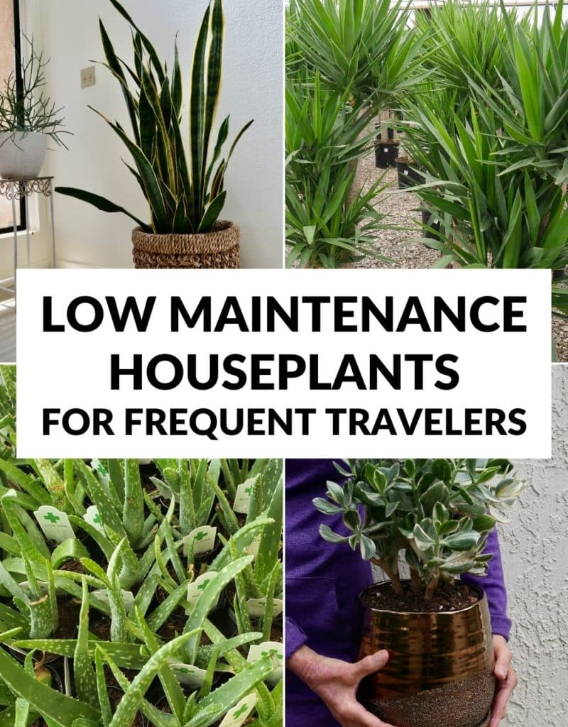 a collage of 4 different types of houseplants the text reads low maintenance houseplants for frequent travelers