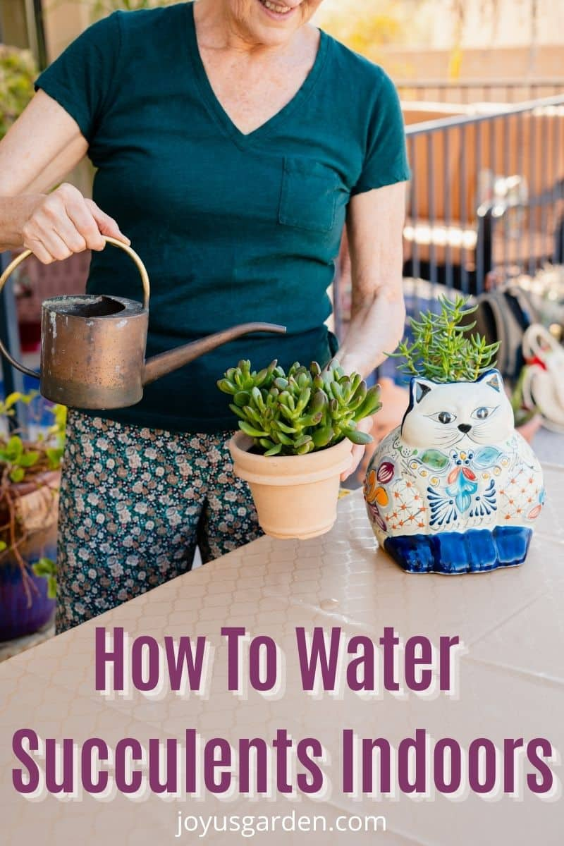 a woman is watering a small jade plant with a cat ceramic plant sitting next to her the text reads how to water succulents indoors