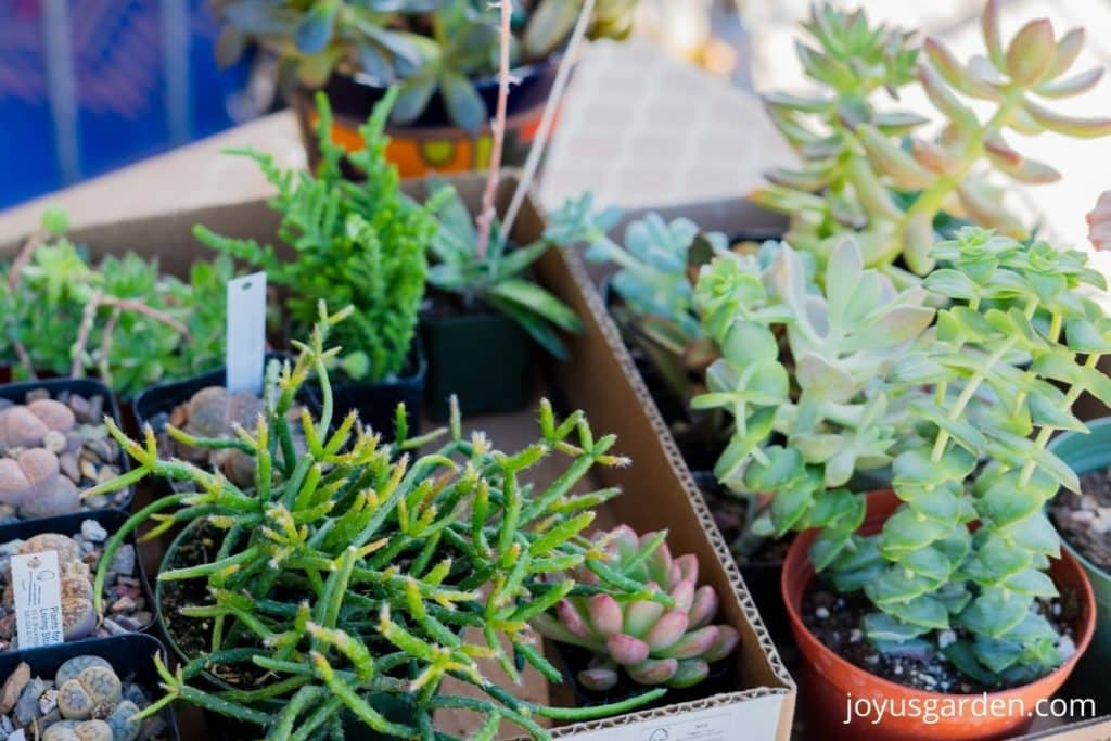 close up of a variety of small succulents