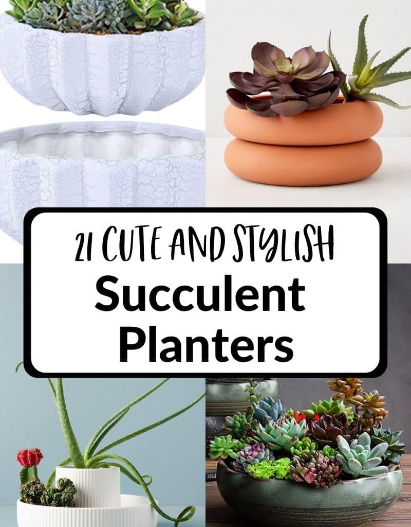 4 low succulent planters make a collage the text reads 21 cute & stylish succulent planters