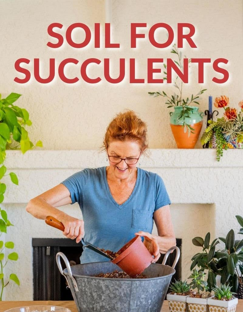nell foster scoops potting soil out of a tine bin the text reads soil for succulents