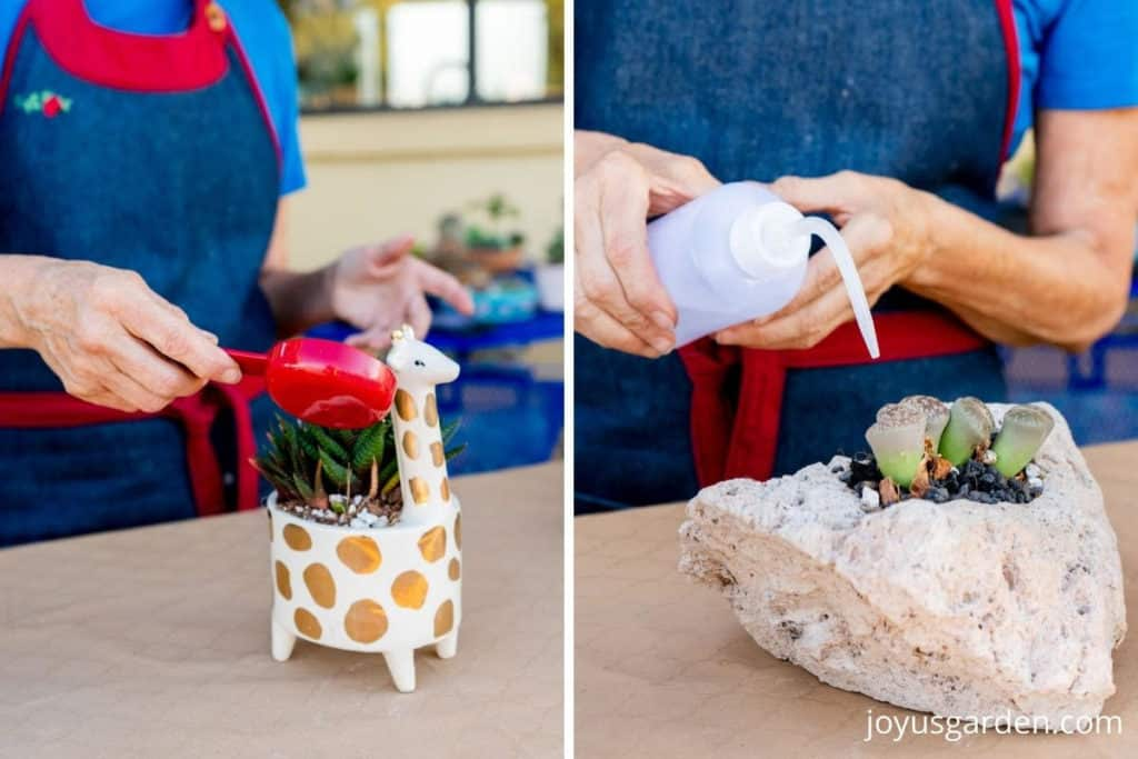 a collage of 2 photos 1 shows a giraffe plant & the other a pumice planter both are being watered