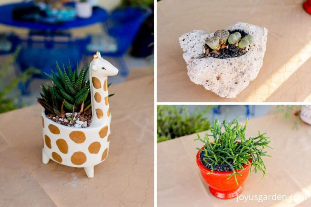 a collage made up of 3 photos of succulent plants directly planted in 3 different decorative pots