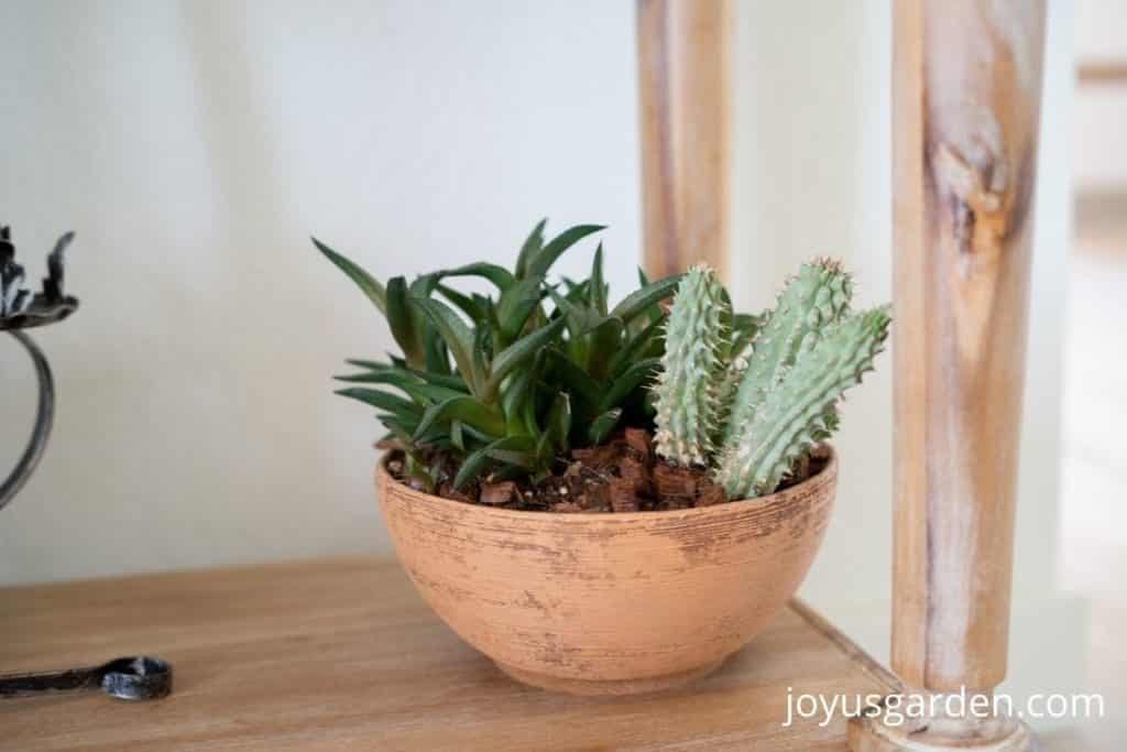 a low terra cotta bowl planted with 2 succulent plants
