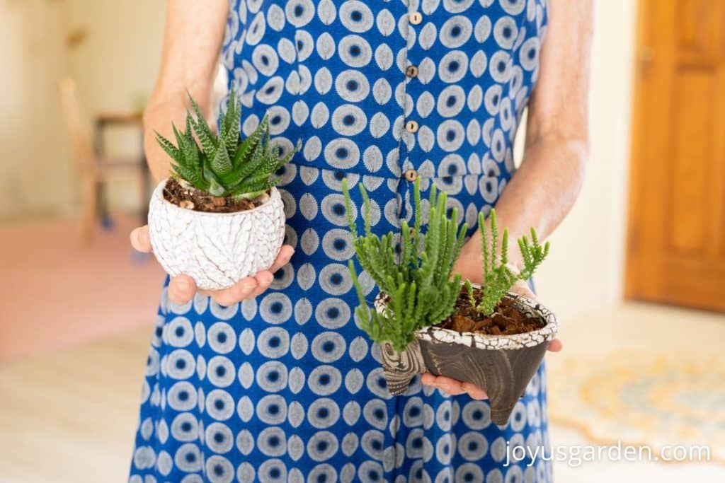a woman in a blue dress holds 2 small succulent plants in 2 small pots