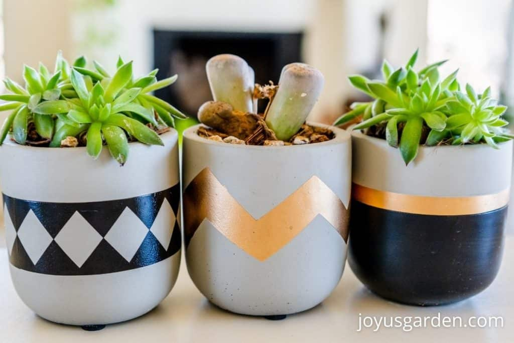 close up of 3 small succulent plants in small decorative pots