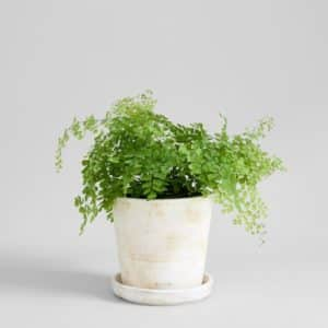 white terra cotta pot from bloomist with houseplant