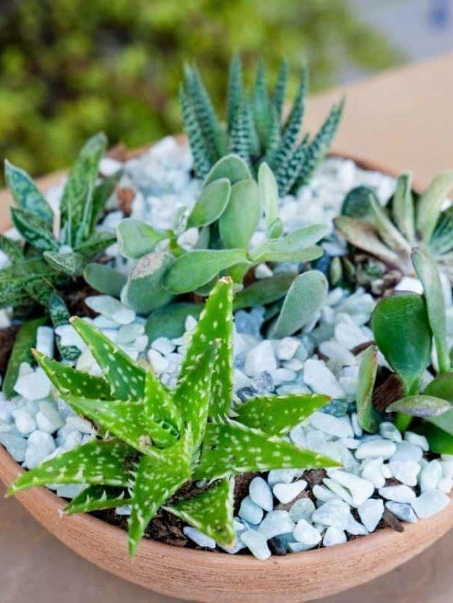 cropped-indoor-succulent-garden-3.jpg