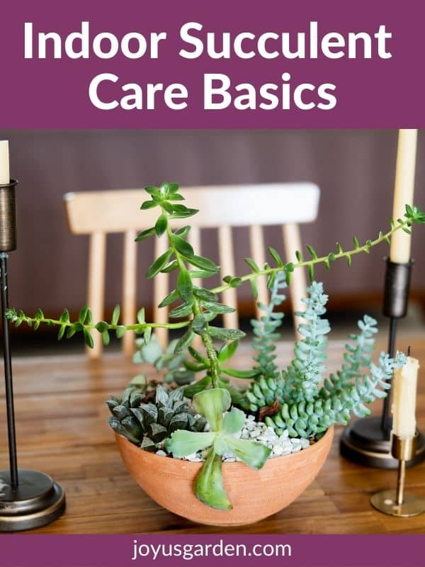 a succulent garden in a terra cotta bowl sits on a dining room table the text reads indoor succulent care basics