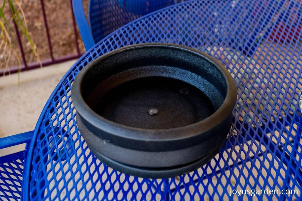 a black low ceramic planter sits on a blue patio table