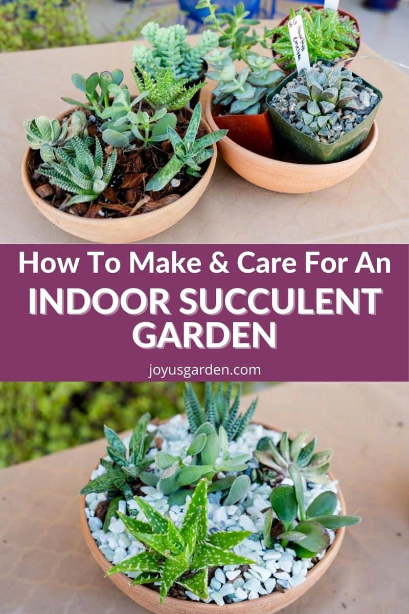 a collage of 2 succulent dish gardens on the top & 1 succulent dish garden on the bottom the text reads how to make & care for an indoor succulent garden