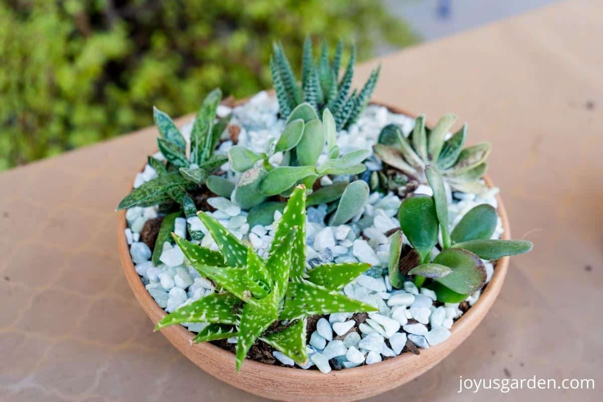 close up oof a succulent dish garden in a terra cotta bowl top dressed with light green decorative rock