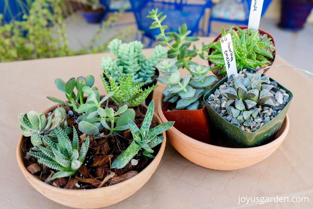 2 succulent dish gardens sit side by side 1 is planted & the other has the succulents laid out in grow pots