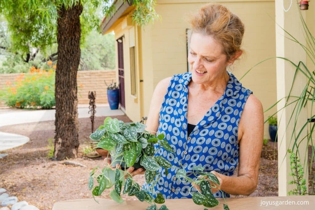 a woman holds a scindapsus pictus satin pothos plant with long trails outdoors