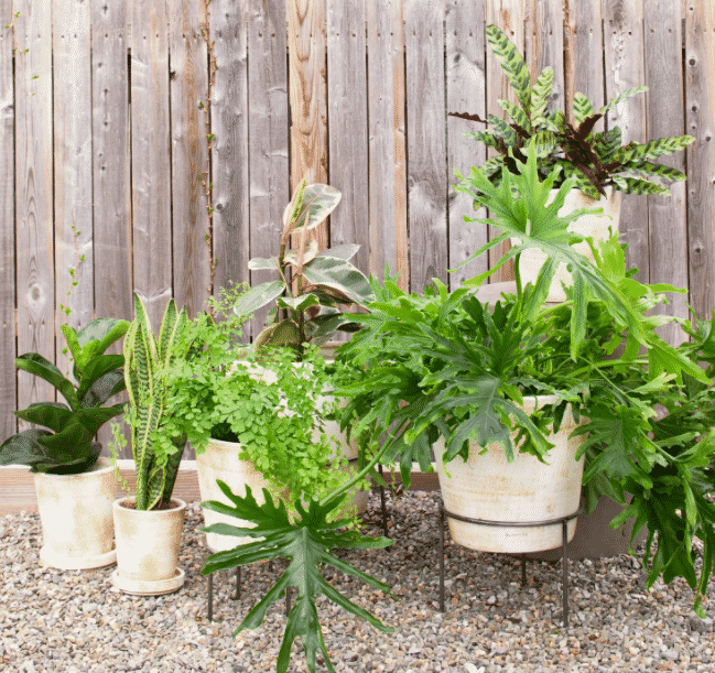 an assortment of different size terra cotta pots with a mix of plants potted inside