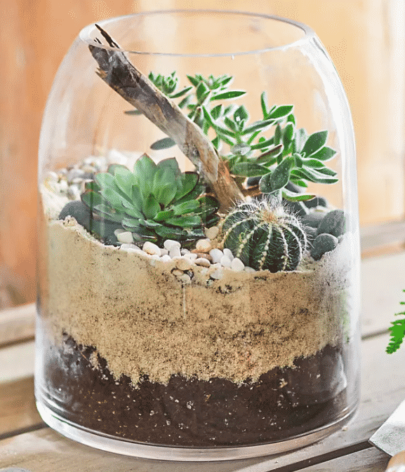 terrarium with a mix of succulents and cacti potted inside