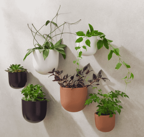six wall planters with a mix of plants potted inside