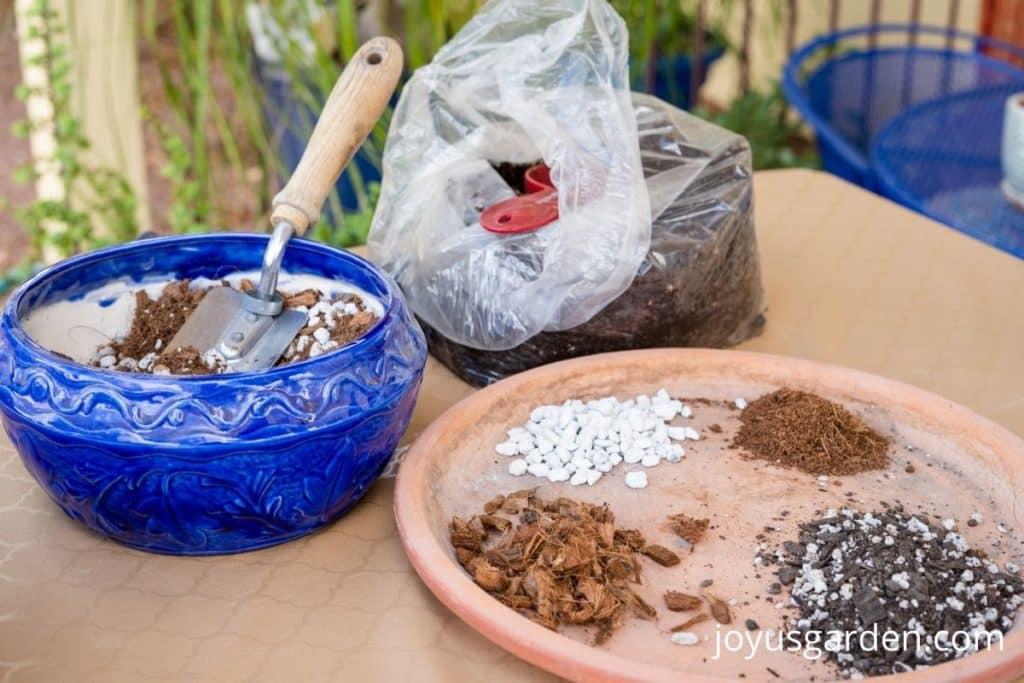 a variety of potting soils & amendments used to repot a rhaphidophora tetrasperma