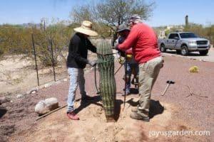 three men planting a saguaro cactus