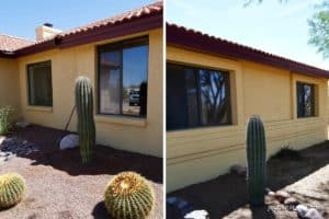 two small saguaro cacti growing in the shade