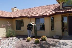 man digging out a saguaro cactus
